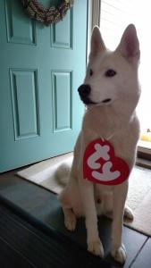 Pet costume 3