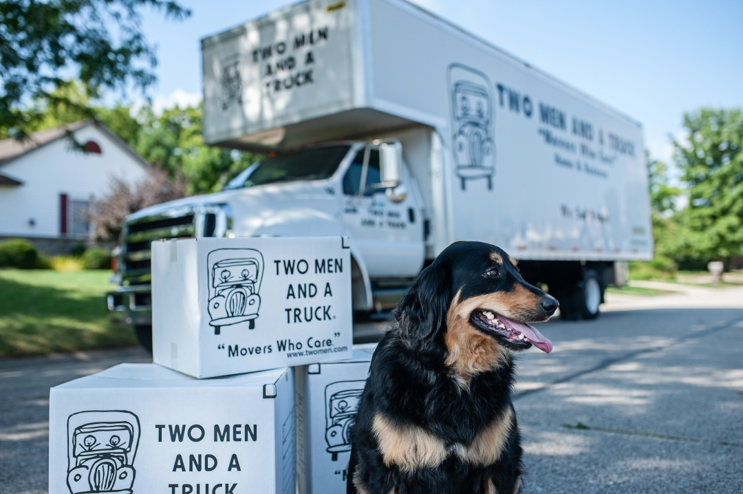 A dog with TWO MEN AND A TRUCK moving boxes